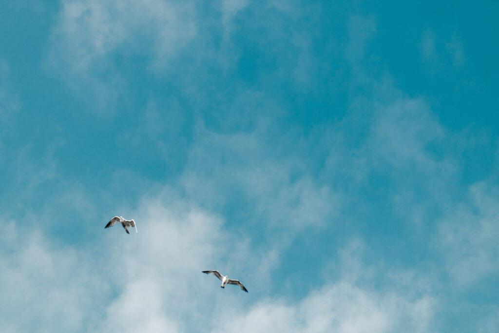 青い空と二匹の鳥