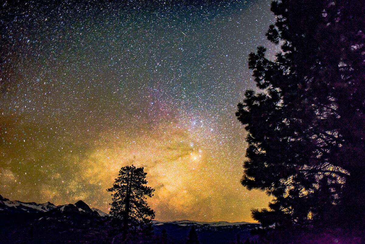 二本の木と星空
